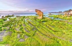 Beach moss dawn Co Thach Stock Photos