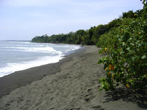 Beach of national park corcovado peninsula osa Stock Photography