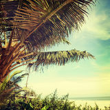 Beach-37. Nature background in vintage style Stock Photography