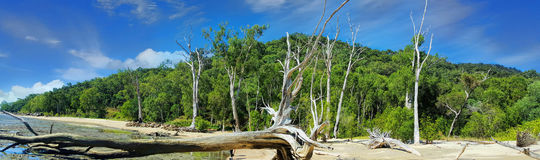 Beach near Cairns with driftwood. Beach near Cairns Australia with the tide out and driftwood on the beach royalty free stock photos