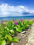 On the beach. The new flowers to celebrate with the good early in the morning Stock Photo