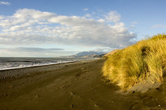 Beach New Zealand. Golden tussocks and sandy beach with a cloudy sky Stock Photography