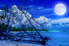 Beach at night with a full moon Stock Image