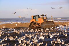 Beach nourishment bulldozer katwijk Royalty Free Stock Photos
