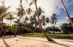Beach and ocean, Dominican Republic Royalty Free Stock Photos