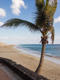 Beach and ocean with palm tree in the foreground Stock Photography