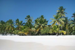 Beach, Ocean and Palm Trees. Tropical Paradise - White Sands Beach, Caribbean Ocean and Coconut Palm Trees background suitable for a variety of traveling and Royalty Free Stock Image