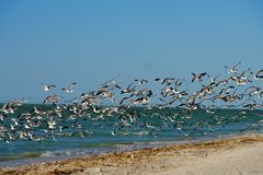 Beach and ocean panorama  in mexico with birds Stock Image