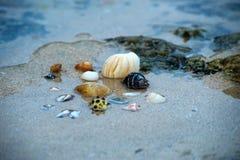 Beach, Ocean, Sand Royalty Free Stock Photo