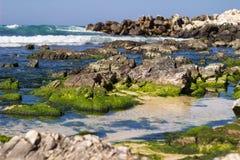 Beach ocean seaweed Stock Image