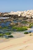 Beach ocean seaweed Royalty Free Stock Photography