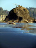 Beach, Olympic National Park stock images