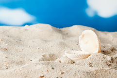 Beach with open seashell Royalty Free Stock Photo