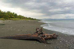 Beach at Osa Peninsula. Dead Tree on Playa Platanares Royalty Free Stock Images
