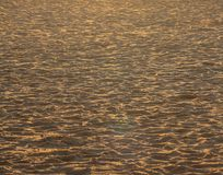 The sand on the beach in Ostend, gilded by the sunset stock photography