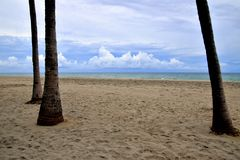 Beach with overcast sky and palm trees royalty free stock photos