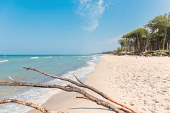 Free Beach Overlooking The Sea With A Tree And A Blue Sky Royalty Free Stock Photography - 119672507