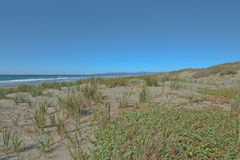 Beach on Pacific coast in Northern California. Beautiful beach near Manila CA with vegetation Stock Photo