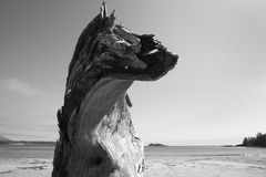 Beach at Pacific Rim National Park. Vancouver. Canada. Trunk Royalty Free Stock Photos