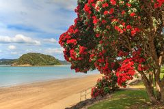 Summer landscape, Paihia, Bay of Islands, New Zealand stock photography