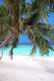 BEACH WITH PALM Royalty Free Stock Images