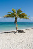 Beach palm Royalty Free Stock Images