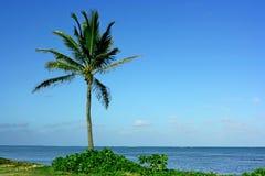 Beach palm Royalty Free Stock Photos