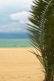 Beach with palm royalty free stock photography