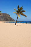 Beach palm. On the canary-islands, Spain Stock Photo