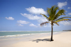 Beach and palm. Caribbean beach with palm and white sand Royalty Free Stock Photo