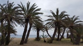 Beach. Palm beach at the cost of Crete Royalty Free Stock Photos