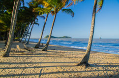 Beach in Palm Cove, Australia. Beautiful beach with coconut palms in the tropical north of Australia Royalty Free Stock Photo