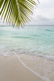 Beach and Palm Leaf, La Digue, Seychelles Royalty Free Stock Image