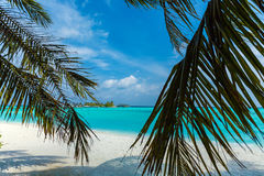 Beach through palm leaves, the Maldives Royalty Free Stock Photography