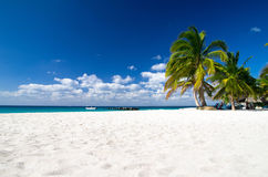 Beach and Palm tree Stock Photo
