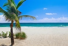 beach palm tree Стоковые Фото