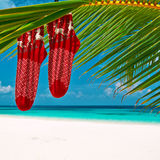 Beach with palm tree at christmas Stock Photo