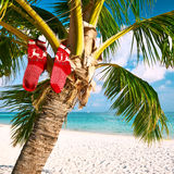 Beach with palm tree at christmas Royalty Free Stock Image