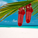Beach with palm tree at christmas Royalty Free Stock Photo