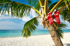 Beach with palm tree at christmas Royalty Free Stock Images