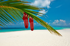 Beach with palm tree at christmas Royalty Free Stock Photography