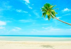 Beach with palm tree over the sand. Holidays Background. Beautiful beach with palm tree over the sand Royalty Free Stock Photography