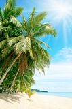Beach with palm tree over the sand. Holidays concept Royalty Free Stock Image