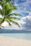 Beach and palm tree on sea and sky background. Sand beach and palm tree on sea and sky background Stock Photos