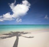 Beach and palm tree shadow. Beautiful white sand beach and palm tree shadow Royalty Free Stock Image
