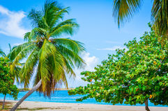Beach Palm Tree Royalty Free Stock Images