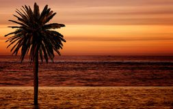 Beach palm tree at sunset Royalty Free Stock Photos