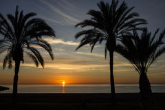 Beach palm tree, sunset view summer nature scene. Royalty Free Stock Image
