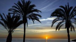 Beach palm tree, sunset view. Summer nature scene. Stock Photo