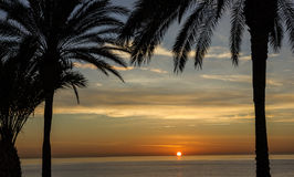 Beach palm tree, sunset view. Summer nature scene. Stock Photography